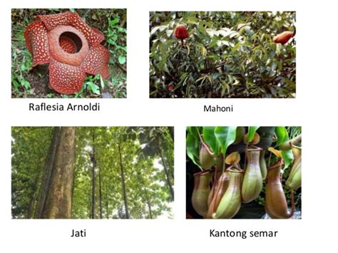flora dan fauna indonesia persebaran fauna dan flora di indonesia