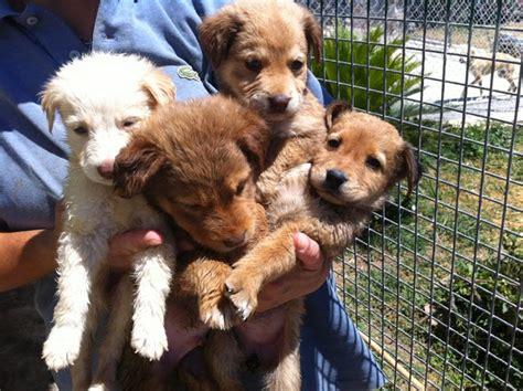 cani da appartamento di piccola taglia foto cani di piccola taglia da appartamento