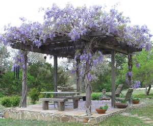 Climbing Flowers For Pergolas by Pergola Climbing Plants Nature S Roof