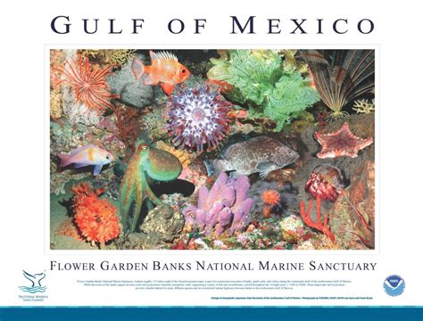 Flower Garden Gulf Of Mexico Island Divers