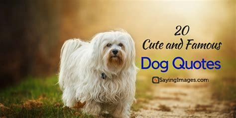 cute famous dog quotes sayingimagescom