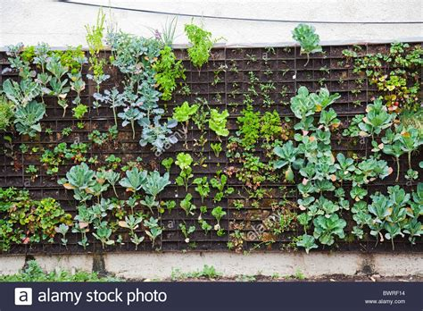 vertical wall gardening best 25 vertical vegetable garden wall 9 vegetable