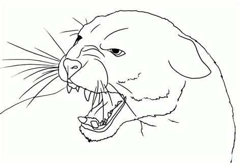pin mountain lions colouring pages on pinterest