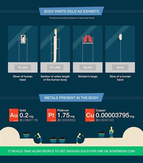 how much does design by humans pay infographic how much is the human body worth in dollars