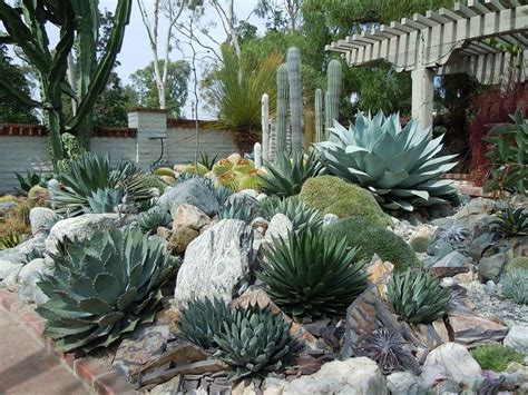 25 best ideas about outdoor cactus garden on