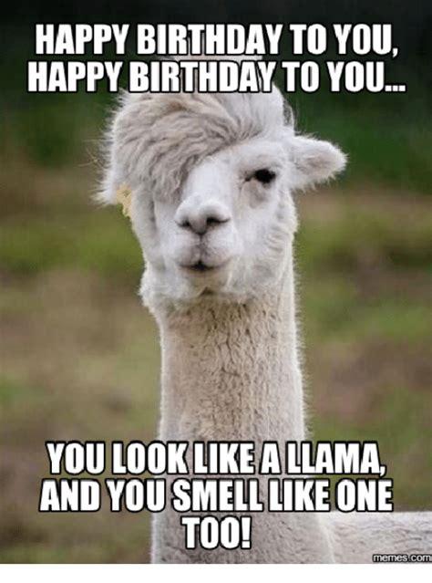 Llama Birthday Meme - llama birthday meme 28 images happy birthday bossy the