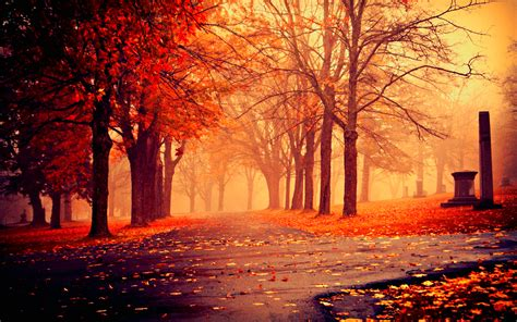wallpaper background fall autumn nature wallpapers hd pictures one hd wallpaper