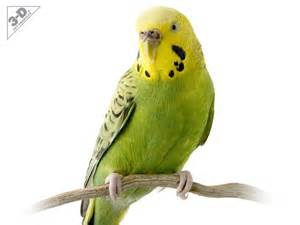 parakeet 3d 174 pet products3d 174 pet products
