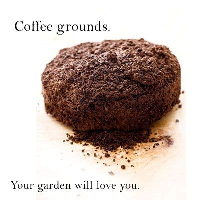 Coffee Grounds For Gardening by Coffee Grounds Gardening Using Coffee Grounds As