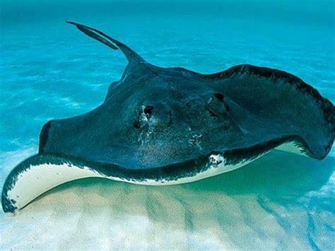 imagenes animales acuaticos 6 bonitas imagenes de animales acuaticos