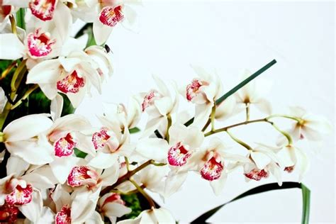bagnare le orchidee fioritura orchidee orchidee orchidee in fiore