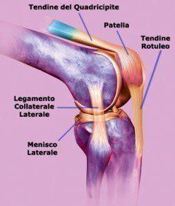 dolore nella parte interna ginocchio tendinite al ginocchio anatomia stadi sintomi e cause