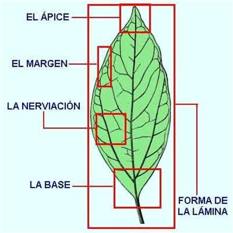 con la forma que quieres coge el palo que hayas escogido para hacer de las hojas de los arboles