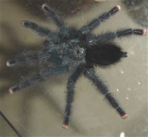 Garden Spider Hibernation Answers To Questions About Spiders At Spiderzrule The