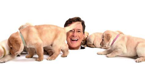 stephen colbert puppies 6 questions we colbert asks tim cook tonight cult of mac