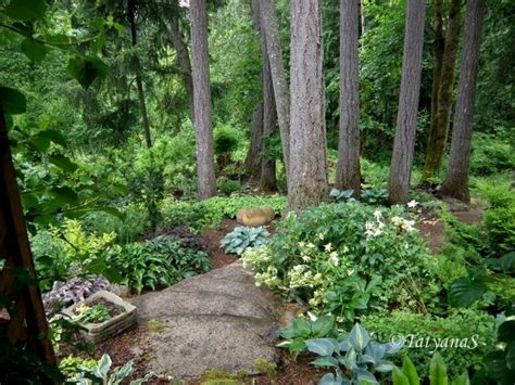 Olive Garden Woodland by 28 Best Images About Slope Gardening On