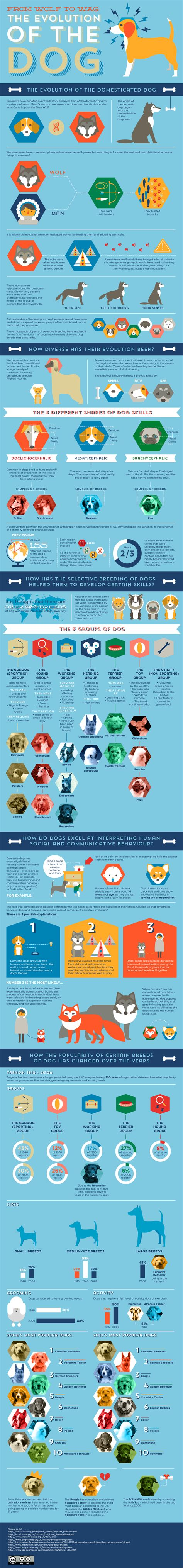 the evolution of dogs the evolution of the infographics