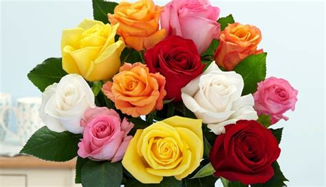 different colors of roses day celebrations 2017 happy day quotes