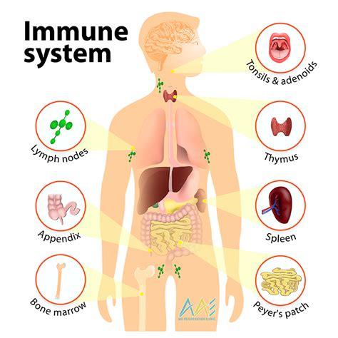 diagram of the immune system immune system defenses lesson 0404 tqa explorer