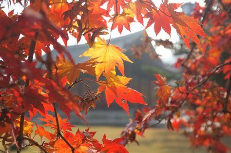 tumblr themes free autumn autumn tumblr themes images