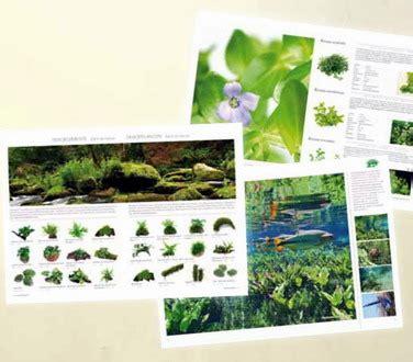 Pflanzen Für Den Gartenteich 990 by Dennerle Pflanzenlandschaft Abdeckung Ablauf Dusche
