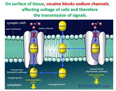 Lidocaine For Cocaine Detox class a drugs sciences in the mural of