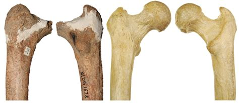 with a bone bone suggests deer cave a mysterious species of human
