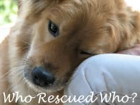 Rescue Dogs Rescue Quotes Quotesgram