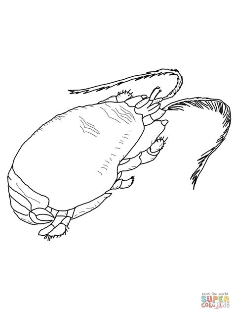 king crab coloring page crab coloring crabs pages grig3 org