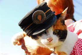 Sho Rainbow So Kucing Sho Kucing Dan Baby Cat Kittens 250ml baju untuk kucing