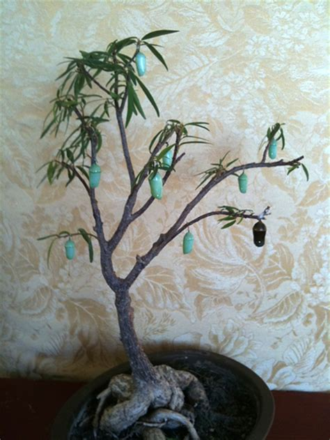 which british monache introduced the christmas tree to uk monarch chrysalis tree what s that bug