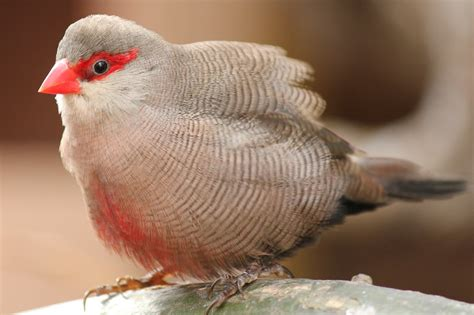 len vogel lüneburg uitheemse vogels arjan boelen vogelfotografie