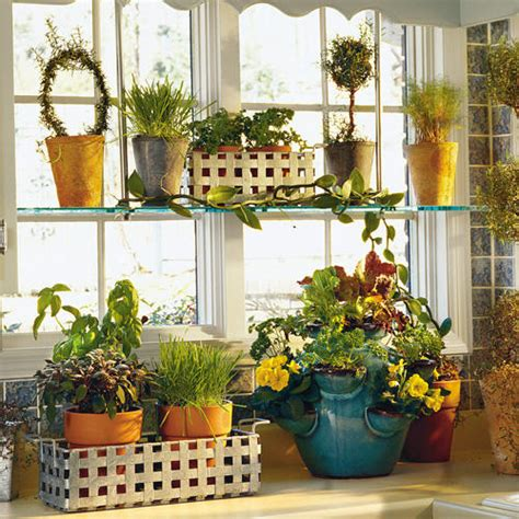 kitchen plants that don t need sunlight plants that grow - Kitchen Plants That Don T Need Sunlight