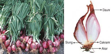 contoh gambar vegetatif alami jobsdb