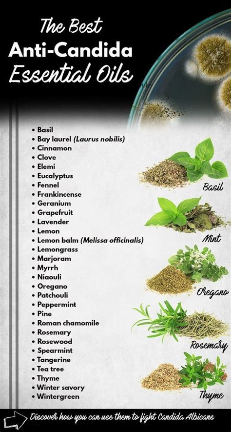 Can Essential Oils Help Detox Thc by 175 Best Candida Symptoms Cure Diet Images On