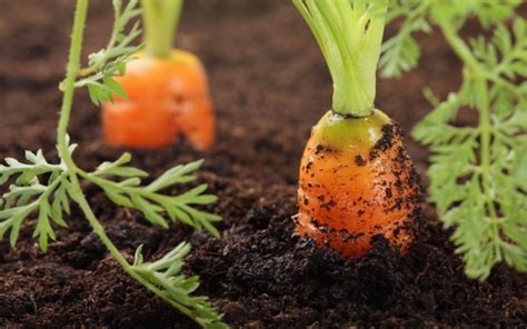 Growing Food in the Perpetual Drought: Miracle Solutions