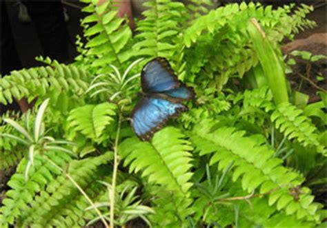 la casa delle farfalle catania casa delle farfalle a viagrande catania snav magazine