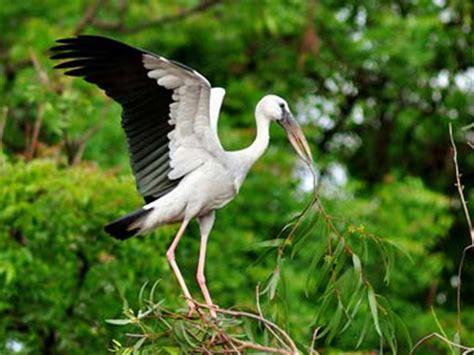 kumarakom bird sanctuary boating houseboat tourism in kumarakom kerala discovering india net