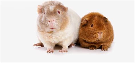 alimentazione animale studio alimentazione animale dott ssa valentina nuti