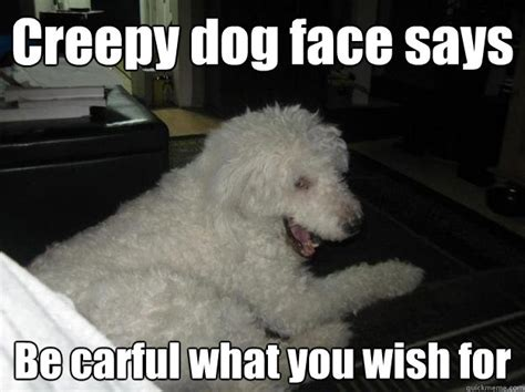 Dog Face Meme - dog face meme