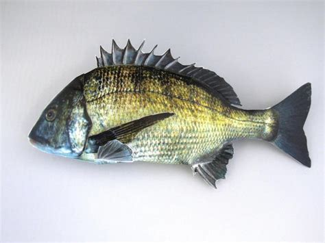 Paper Craft Fish - papercraftsquare new paper craft black seabream fish