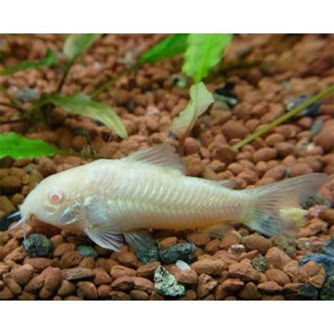Cacing Di Aquascape akuarium unik macam jenis ikan khusus aquascape