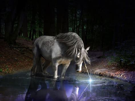 imagenes de animales unicornios fonditos el unicornio fantasia animales magia
