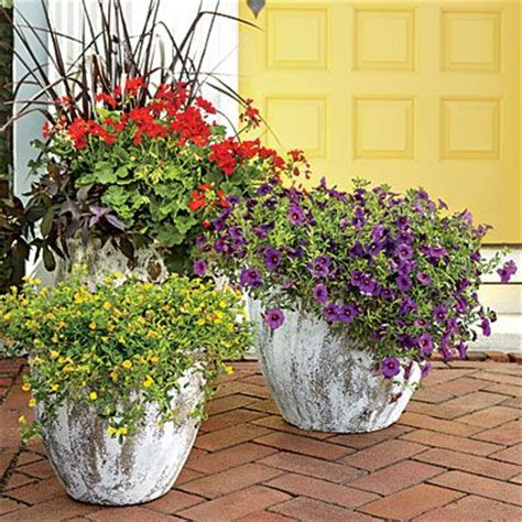 southern living container gardening warm and cheerful trio container gardening geraniums