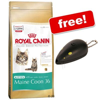Royal Canine Maine Coon 400gr is royal canin maine coon 31 the best cat food for
