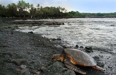 punaluu county beach park big island hawaii black sand punalu u beach una playa de arena negra en haw 225 i