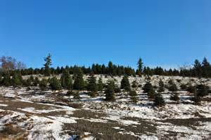 christmas tree farms where in portland oregon and review
