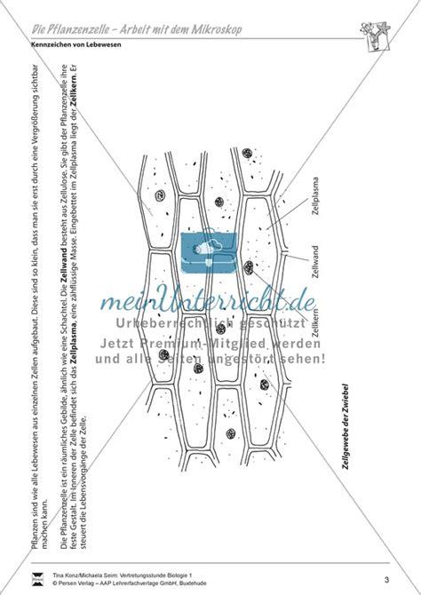 Beschriftung Zwiebelzelle by Biologie 220 Bungen Biologie 220 Bungen Und
