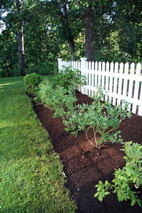 backyard berry plants in the fields june 2011