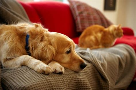 Apartment Living Pets How To Make Your Apartment Pet Friendly Pets In